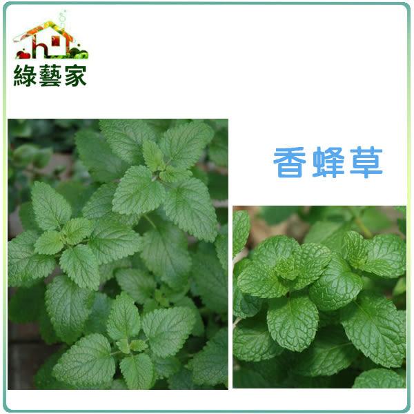 【綠藝家】大包裝K04.香蜂草種子4克 (約4500顆)