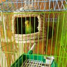 城堡草編鳥窩鸚鵡窩鳥巢