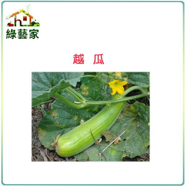 【綠藝家】大包裝G16.越瓜(青醃瓜)種子600顆