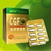核綠旺~綠藻精核酸膠囊-CGF核酸基因營養素60粒/盒