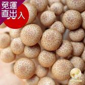 Global Fresh 日本長野鴻喜菇30入200g/包【免運直出】