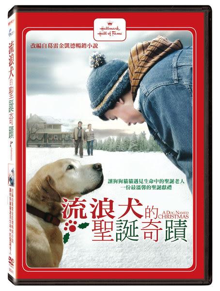 流浪犬的聖誕奇蹟 DVD (音樂影片購)