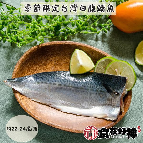 台灣白腹鯖魚約22-24尾/箱