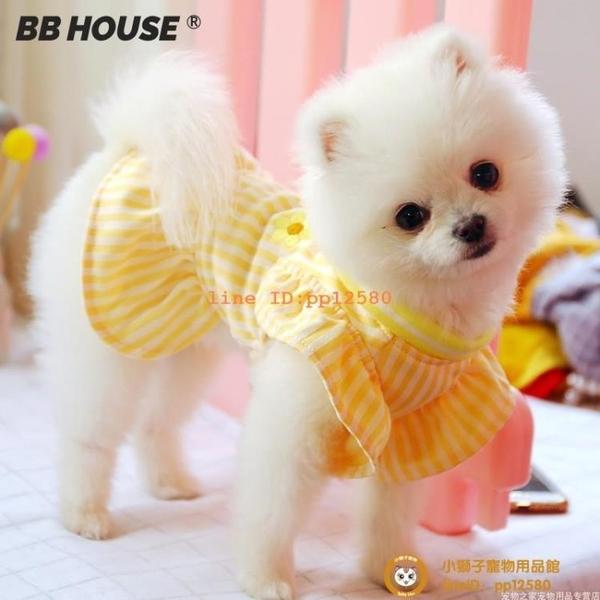 春夏薄款狗狗裙子貓咪寵物比熊博美約克夏雪納瑞泰迪衣服小型犬小狗狗【小獅子】