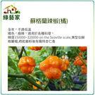 【綠藝家】G69.蘇格蘭辣椒(橘)種子5...