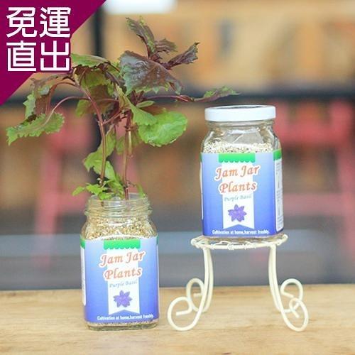 迎光 Jam Jar Plants果醬小植栽紫蘇【免運直出】