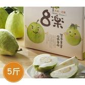 【鮮食優多】森芭樂園•芭樂郭爸爸-珍珠芭樂(5斤/盒)