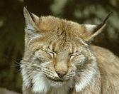 客服測試-山貓