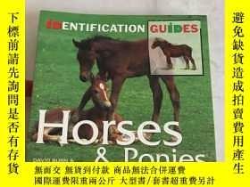 二手書博民逛書店Horses罕見& Ponies Identification