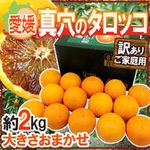 【果之蔬-全省免運】日本愛媛縣血橙原裝盒X1盒【2kg±10%/約10~12入】