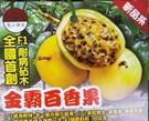 花花世界_水果苗--金霸百香果--新品種...