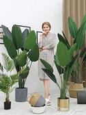 大型北歐仿真植物落地天堂鳥盆景室內裝飾假盆栽綠植擺件旅人蕉樹 HM 范思蓮恩
