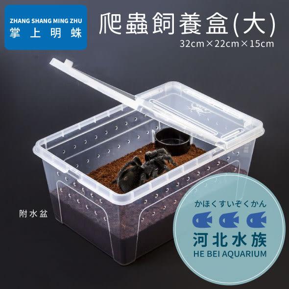 [ 河北水族 ] 掌上名蛛 【 爬蟲飼養盒 大 】 附水盆 飼育盒 繁殖盒 兩棲 爬蟲 蜘蛛 青蛙 烏龜