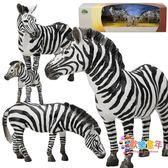 斑馬動物模型實心非洲野生斑馬塑料靜態生物模型5 禮盒裝兒童玩具
