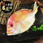 【漁季】赤鯮魚300GX6尾(大組)-電電購