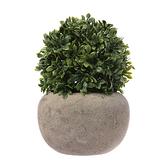 波特仿真盆栽 小樹苗 13cm