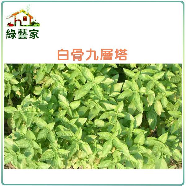 【綠藝家】F01.九層塔 (白骨羅勒)種子500顆