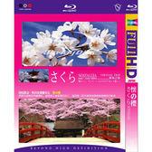 Blu-ray懷之櫻BD
