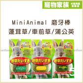 寵物家族-MiniAnimal兔用磨牙棒 三種口味 (蓮茸草/車前草/蒲公英) 單包10入