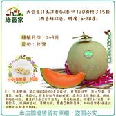 【綠藝家】大包裝I13洋香瓜(春妍 1303)種子15顆 (肉色鮭紅色,糖度16-18度)