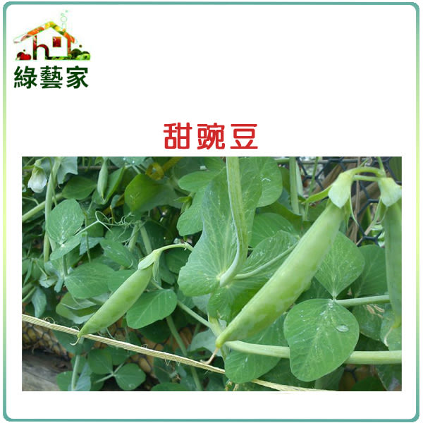 【綠藝家】大包裝E03.甜豌豆 (嫩豆)種子350克