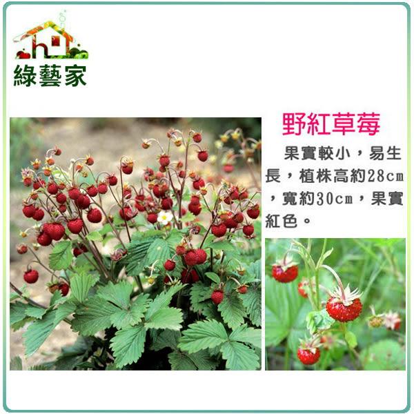 【綠藝家】大包裝I07.野紅草莓種子(英國進口)120顆