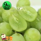 果之家 特選A級空運澳洲鮮嫩綠無籽葡萄1箱(9kg/箱)