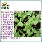 【綠藝家】K20.水晶冰花種子(冰花.日...