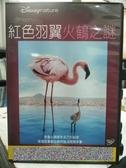 挖寶二手片-G05-038-正版DVD-動畫【紅色羽翼:火鶴之謎】-迪士尼(直購價)