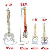 尺寸兩種以上請詢問報價包郵人體脊椎模型帶骨盆股骨 人