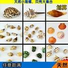 魚缸造景裝飾品天然海螺貝殼卷貝魚寄居蟹套裝海星道具台拍攝擺件─預購CH1288
