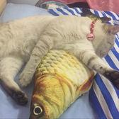 貓玩具磨牙小貓抱枕貓咪博荷草魚枕頭-60CM