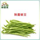 【綠藝家】E02.無蔓敏豆(無蔓矮腳品種...