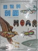 【書寶二手書T1/少年童書_DNQ】動物的剖面_原價900_Andres Llamas Ruiz原
