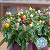 CARMO觀賞五彩椒種子 辣椒朝天椒 園藝種子(20顆)【FR0029】