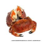 英國麵包蟹 (600g±5%)...