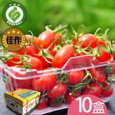 產銷履歷-百分百甘ㄚ蜜-玉女小蕃茄10台斤含運組
