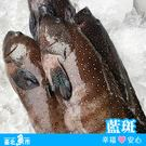 【台北魚市】  藍斑 450g±10%