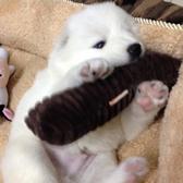 狗狗玩具中小型犬耐咬發聲棉骨頭泰迪貴賓比熊法牛柯基玩具狗枕頭