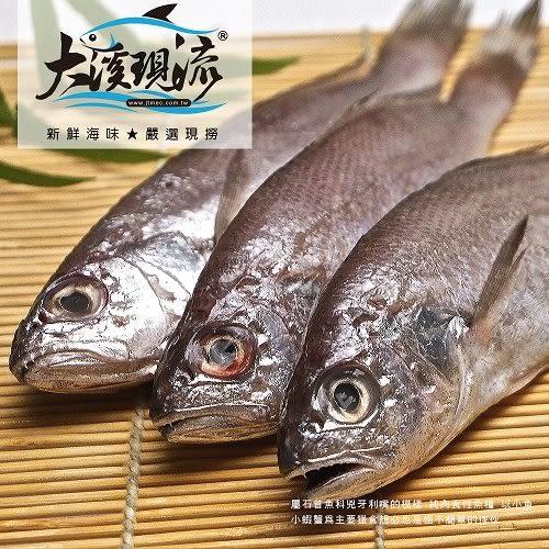 野生現撈 黑喉魚 ( 中尾 250g±10% 尾 )【大溪現流】
