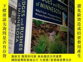 二手書博民逛書店Sedges罕見and Rushes of Minnesota: