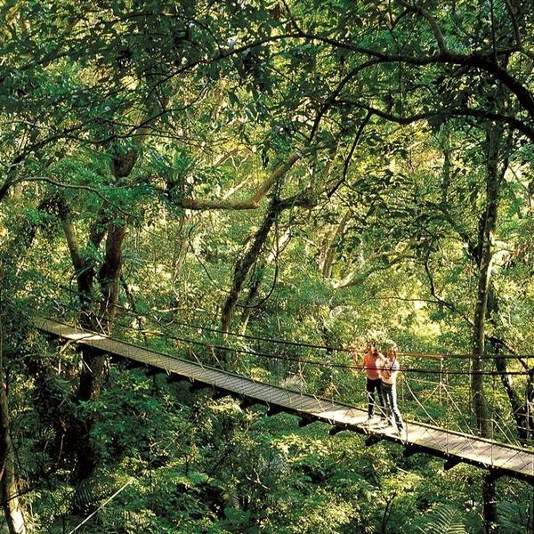 【三峽】大板根雙人森呼吸假期(含早餐、入園門票、園區導覽、露天溫泉SPA)