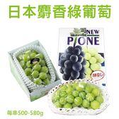 【果之蔬-全省免運】日本麝香綠葡萄禮盒X1盒【500g-580g/盒】