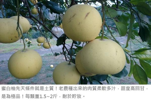 頂級老欉蜜白柚★花蓮鶴岡無毒農業★25斤 過年年終春節禮盒