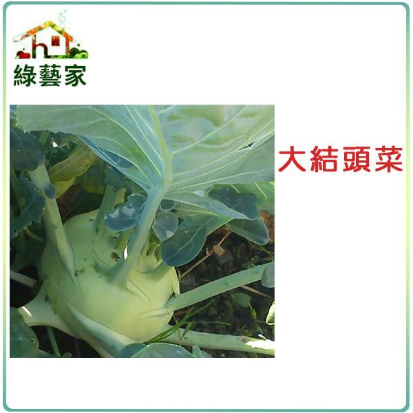 【綠藝家】大包裝C08.大結頭菜種子1.05克(約200顆)(荷蘭種,約一般傳統結頭菜2~3倍大)