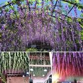 仿真紫藤花豆花串長款婚慶裝飾藤條室內吊頂藤蔓花紫羅蘭花藤假花