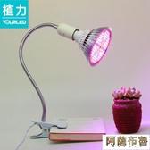 植物燈 植力【植物燈泡】多肉補光上色全光譜LED大棚仿太陽蔬菜花卉夾子 阿薩布魯
