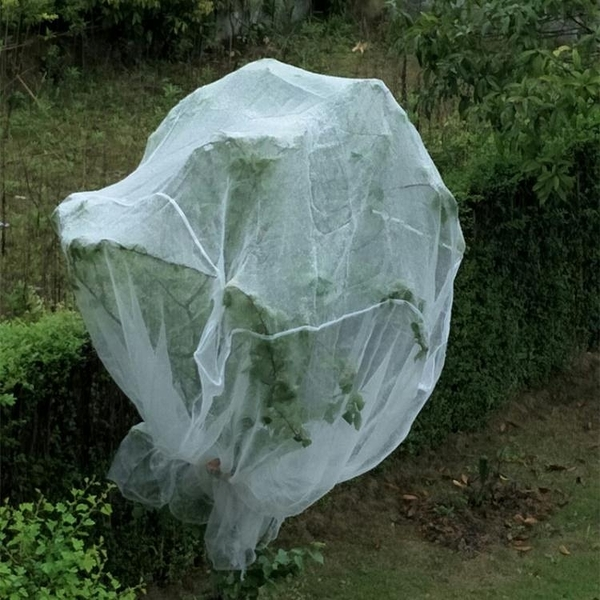 防鳥網防鳥網水果樹罩多肉蓮霧桃樹羅幔大棚專用罩  【快速出貨】