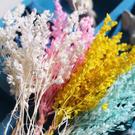 真森林風,彩色乾花,永生花花材 ,一份3克