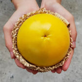【鮮食優多】加走埤果園•友善種植無毒黃金果5斤2盒(12~16顆)